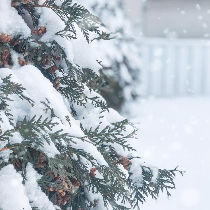 Christmas-Roast-Springwater-Golf-Club